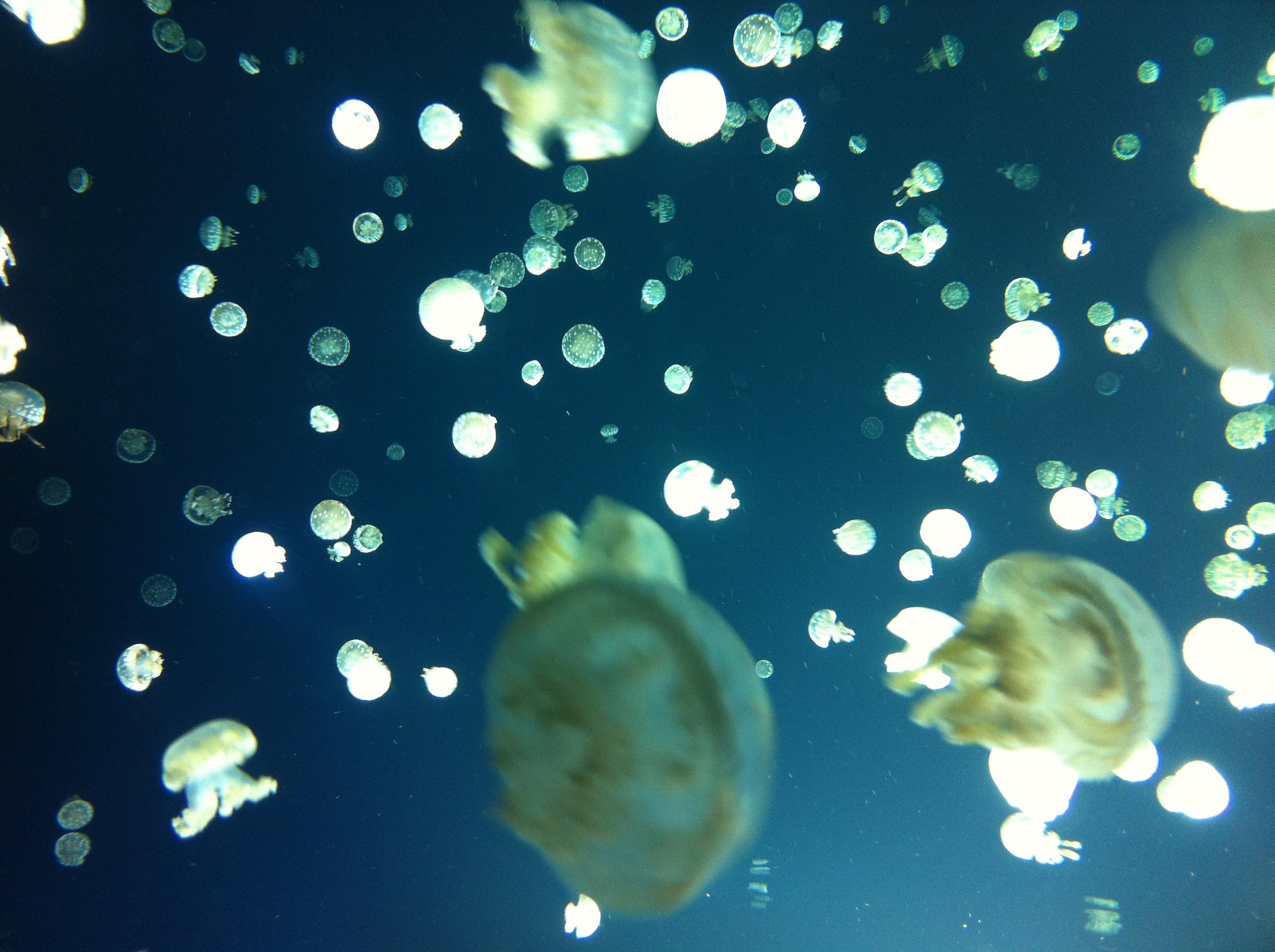 looking to nature for inspiration - toronto aquarium